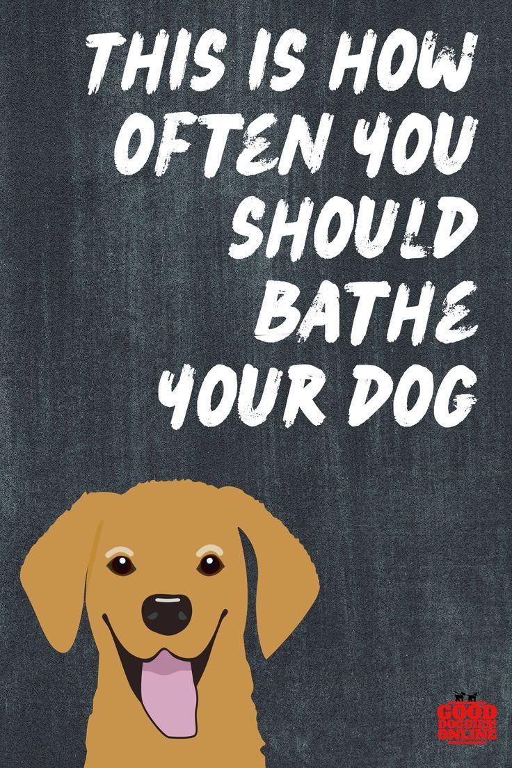 How Often To Bathe A Dog Big Dog Little Dog Basic Dog Training