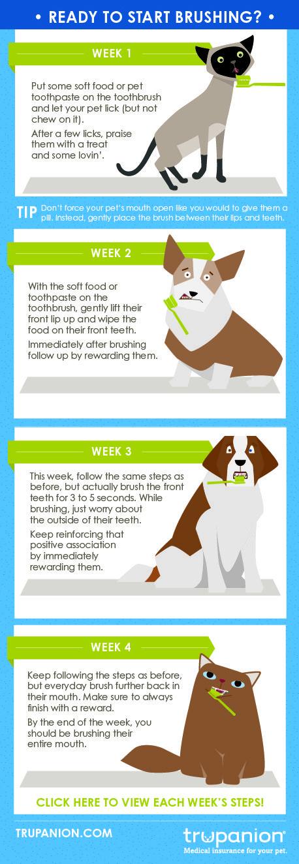 Best Soft Dog Food For Sensitive Teeth