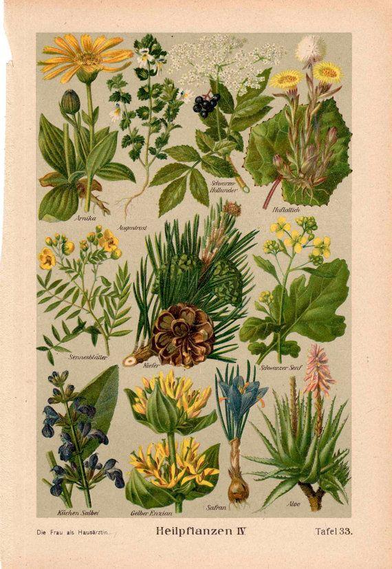 1921 medicinal plants