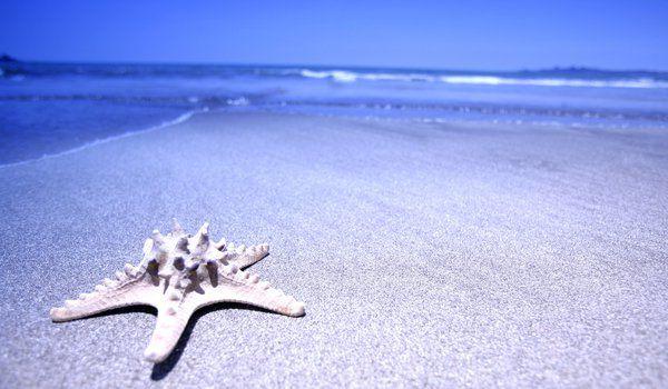 Обои на рабочий стол: вода, звезда, море, песок