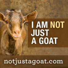 I am more than Just a goat. Learn more: notjustagoat.com