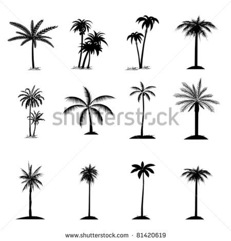 Set of palm tree, isolated on white, vector