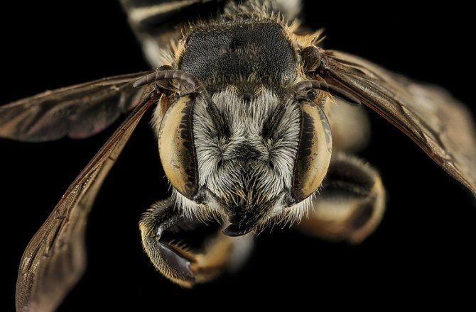 California's Killer Bees Are Spreading North