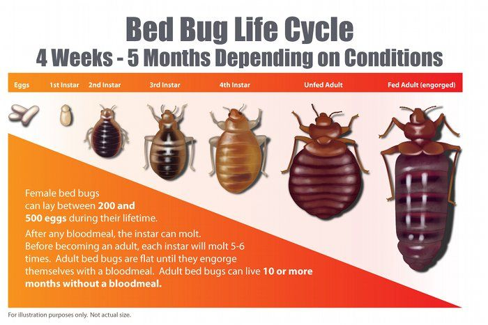 Midwest Bed Bug Services is the premier bed bug exterminator in the midwest. Heat Treatment Bed Bugs is our main specialty.