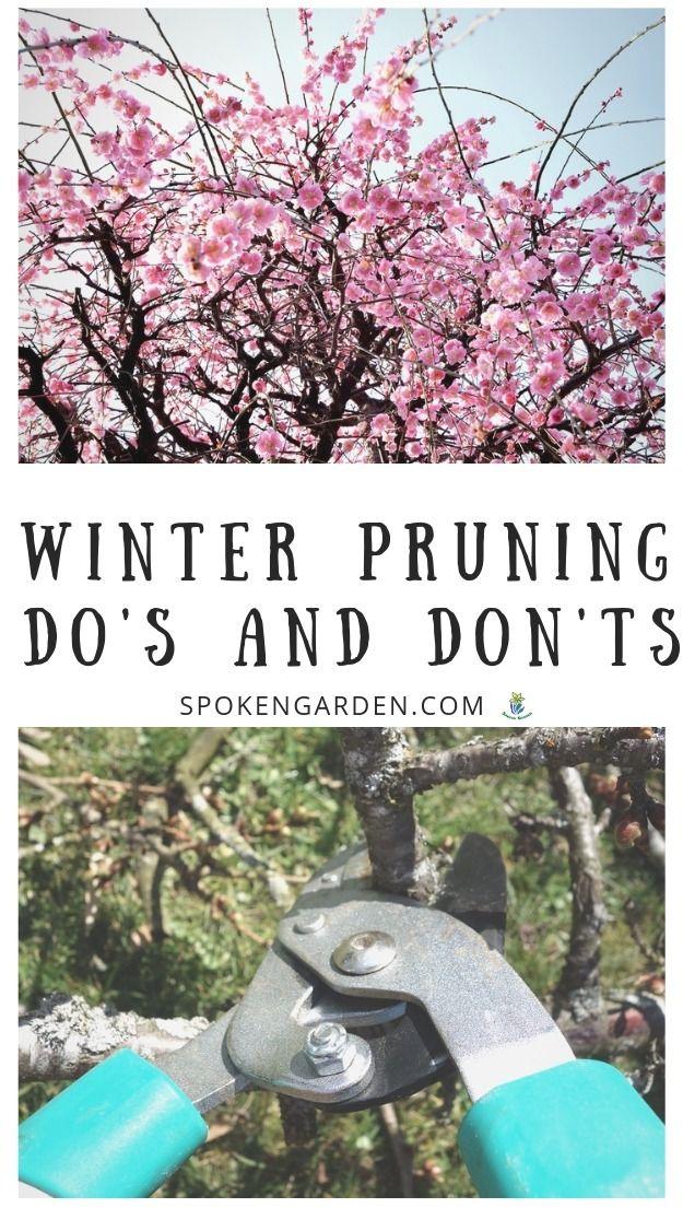 Winter Pruning Do S And Don Ts Ep 32 Spoken Garden Prune Organic Gardening Tips Pruning Plants