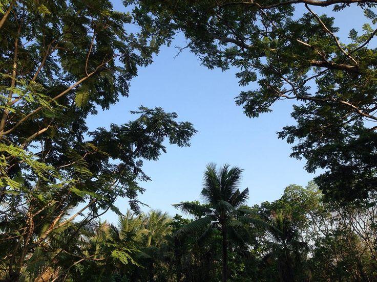 まったく豊かな自然を忘れていなかったタイタイバンコクより南方チャオプラヤ川を渡ること五分の所にあるバンカチャオ  ここはタイの観光スポットの一つバンコクに極めて近く  現地タイの経済発展がまだなされていない所を見ることができます  自然がまだまだたくさん残るタイですが  世界の誰か が絶対に良いことだと経済発展を進める以上  こんなに素晴らしい自然が不必要になくなってしまうのも時間の問題だなあ...  すでに誰もが当たり前に分かっていることですが  都心部バンコクがあるいて20分程の所にあるからこそ  今日豊かな自然の素晴らしいさをいつも以上に感じてしまいました  経済発展をすることはより生活は便利になるし金銭面その他良いことはたくさんあります  しかし  これからの時代は心の時代  と言われているように  経済発展をして来た日本やアメリカその他の国々でも心の問題は  経済発展しようともなくなっていません  人は幸せになるために生きている  という言葉を聞いたことがありまさすが  経済発展をしてなお必ずしも幸せにならないならば問題が消えないならば)…