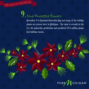 12 Days of Michigan: Day 9: Puree Michigan, Harbor Country, Christmas Ideas