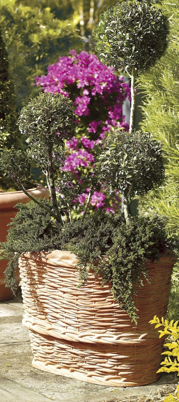 best 670 garden oasis images on pinterest | home decor | garden