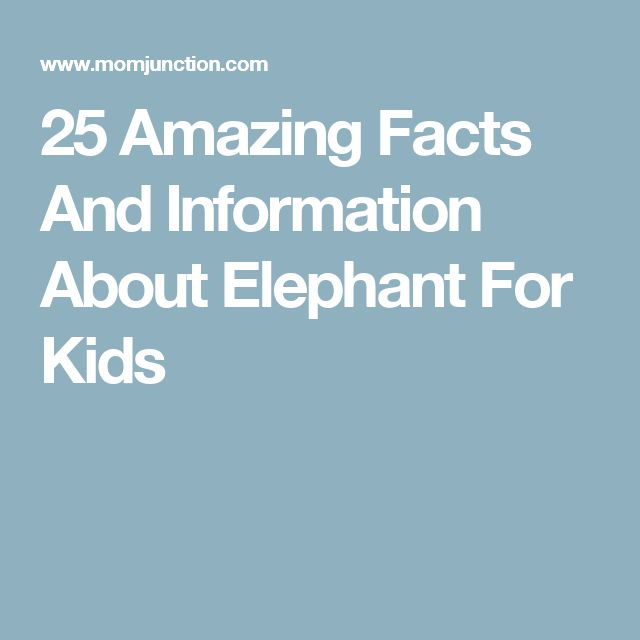 25 Amazing Facts And Information About Elephant For Kids