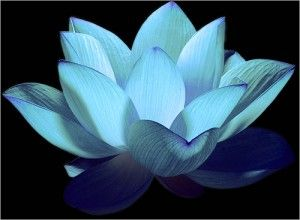 Tibetan Blue Lotus Flower Pictures | Strike a Pose to Reduce Anxiety | Brain Blogger