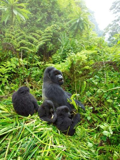 ... Mist, Rwanda | Animals | Pinterest | Mists, Track and Animals and pets