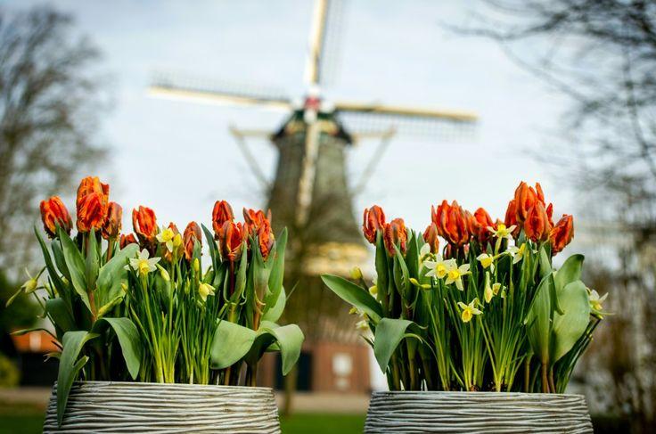 De Nederlandse economie groeit met 1,4 procent in april. Dat voorspelt de Stand van Nederland, de conjunctuurbarometer van Z24. http://www.z24.nl/economie/stand-van-nederland-economie-groeit-lekker-door-549987