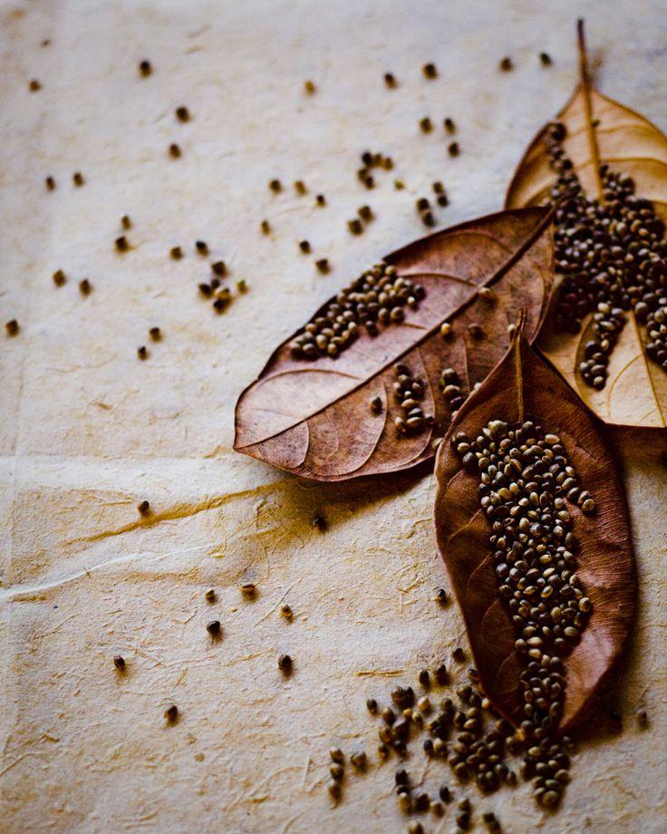 Mustard Seeds by Jeroen van der Spek