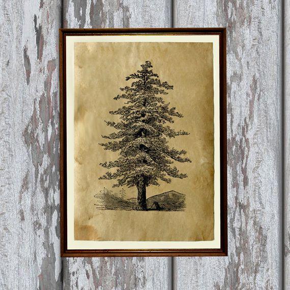 Pine tree art.