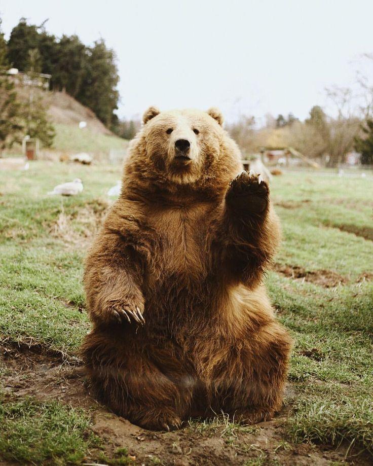 """becca tapert on Instagram: """"Hi Bear """""""
