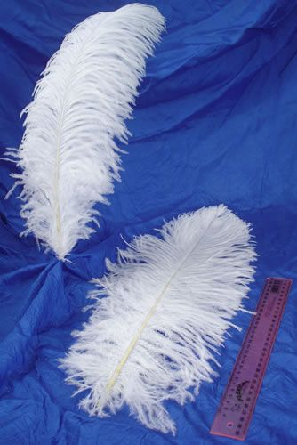 40-50cm Ostrich Plume Feather