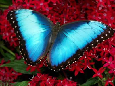 Blue Morphos Vision http://youtu.be/tibuBh56QsA Kimberly Burnham's story of vision recovery visit http://pebblesinthepondbook.com/blog/transformational-authors/blue-morphos-butterflies-in-the-colombian-jungle/ and The Nerve Whisperer at http://www.NerveWhisperer.com