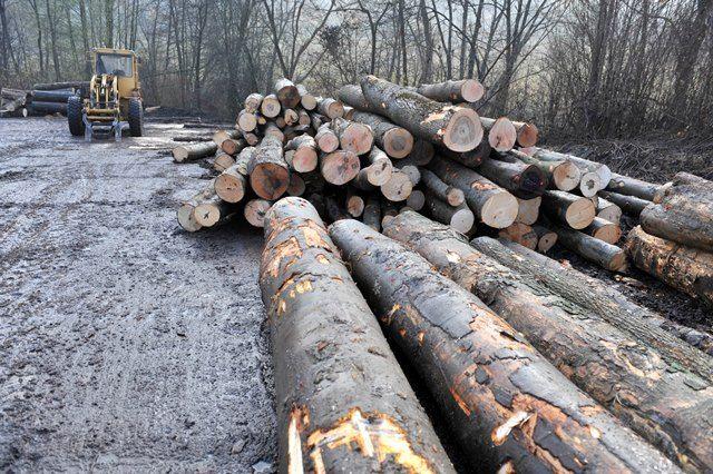 """Maryland 23. marca 2018 (HSP/Foto:TASR-Pavol Ďurčo)  V dnešnej dobe drevo vo výrobe ustupuje odolnejším materiálom, ako je napríklad plast, kov alebo kompozit, pri ktorých je ich výroba väčšou záťažou pre životné prostredie. Preto sa vedci snažia """"zahustiť"""" štruktúru tohto prírodného materiálu, aby zvýšili jeho pevnosť a odolnosť, informujú Lidovky.cz S revolučnou receptúrou teraz prichádza …"""