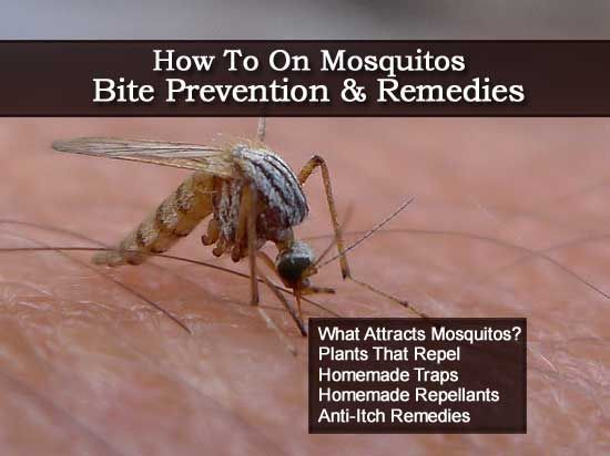 How To On Mosquitos - Bite Prevention & Remedies