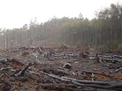 deforestation solutions essays
