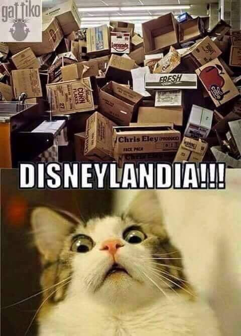 Disney for my Cat