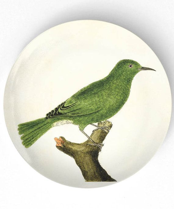 Birds I -  hand colored 1700s bird artwork on 10 inch Melamine Plate with a softly aged off-white background ETSY