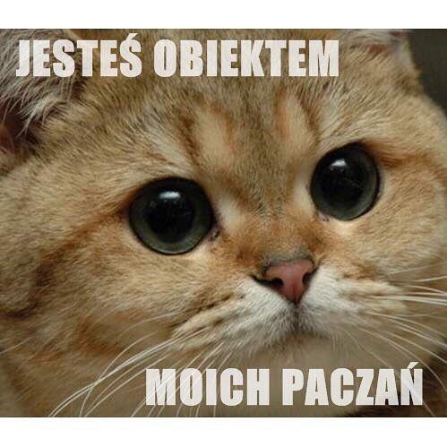 """Polubienia: 15.1 tys., komentarze: 188 – Suchar Codzienny (@sucharcodzienny) na Instagramie: """"Daj ❤️ dla obiektu swoich paczań! #suchar #codzienny #sucharcodzienny"""""""