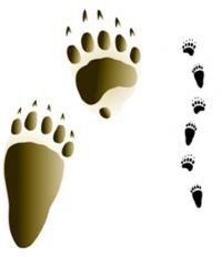 medveď hnedý - stopy