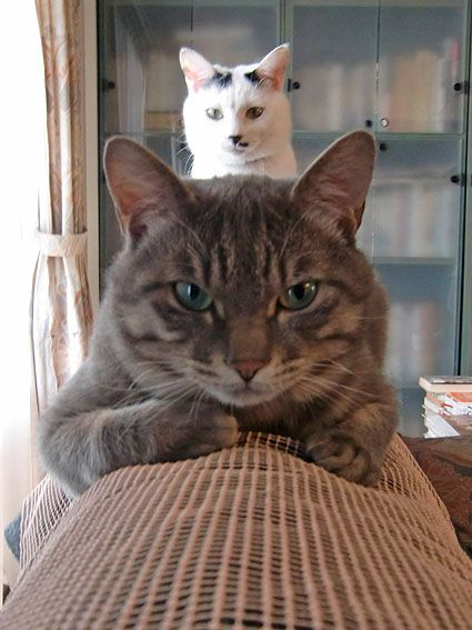 She's right behind me...Isn't she?