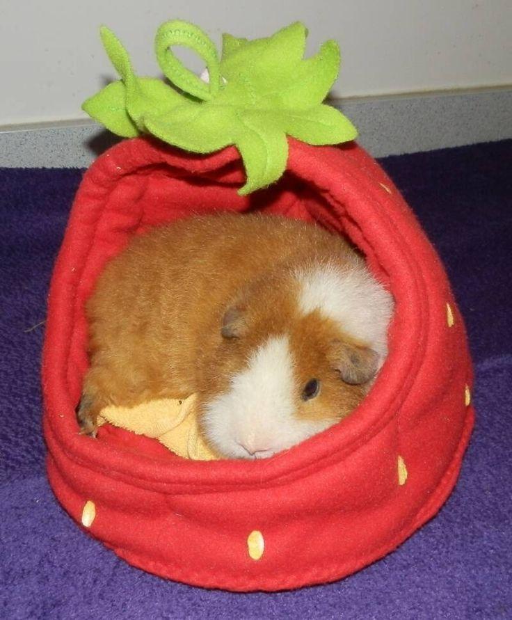 Piggy crash pads guinea pig time pinterest for How to make a guinea pig bed