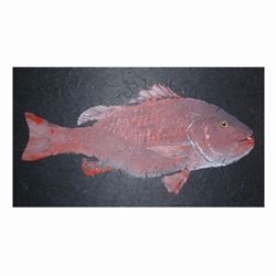 Dog Tooth Snapper Gyotaku print on Black Unryu paper.Image provided by customer Captain Warren Sellers. Capt.Sellers takes customers deep sea fishing and provides mulberry paper for gyotaku prints to preserve the memory.