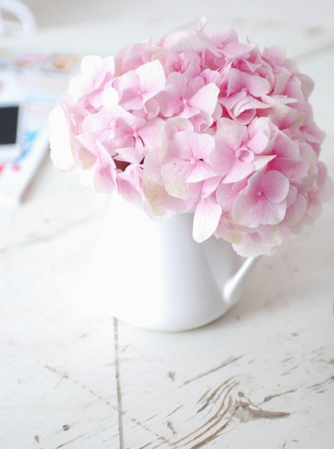 Baby Pink Hydrangea by yvestown, via Flickr