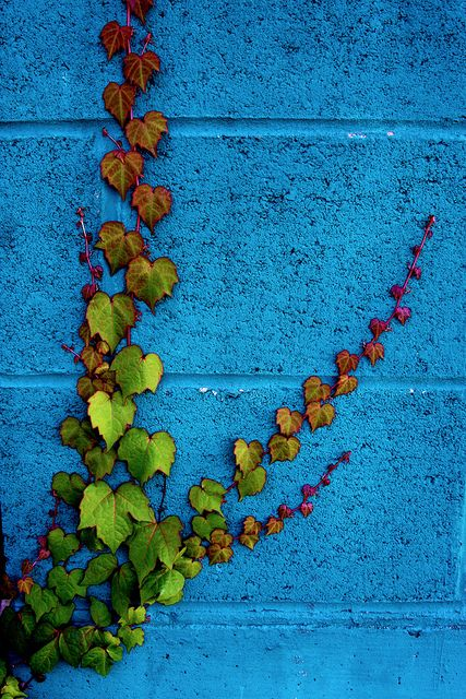 green & magenta vine on a bright blue wall...this is really striking and would make a really neat painting.