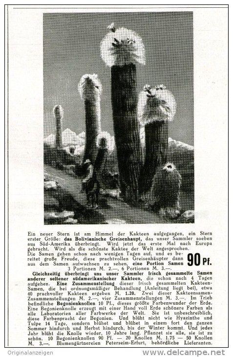 Popular Original Werbung Anzeige DAS BOLIVIANISCHE GREISENHAUPT G RTNEREI PETERSEIM ERFURT ca