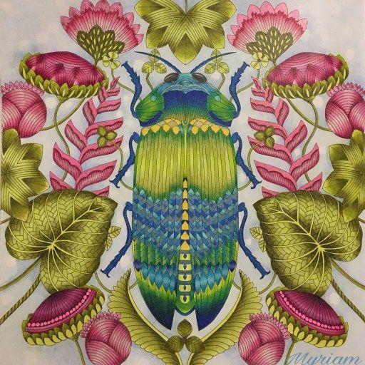 Curious Creatures Millie Marotta ColouringColoring BooksAdult