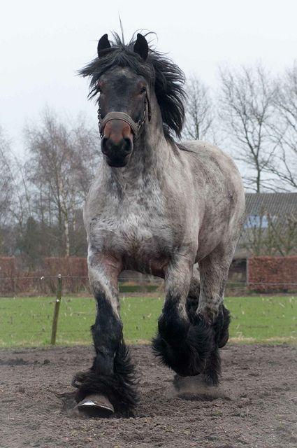 Draft horse by Ton van der Weerden