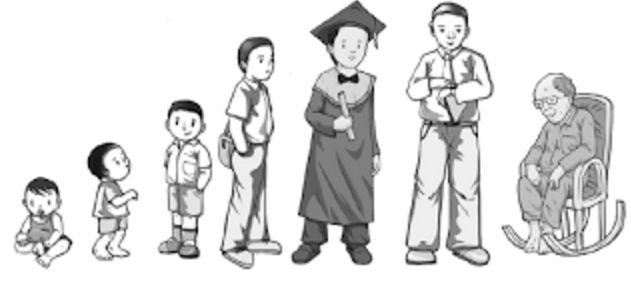 Perkembangan dan Pertumbuhan Manusia Dari Bayi Sampai Lanjut Usia Materi Pelajaran SD kelas 6 - Kamar Belajar - Free Learning