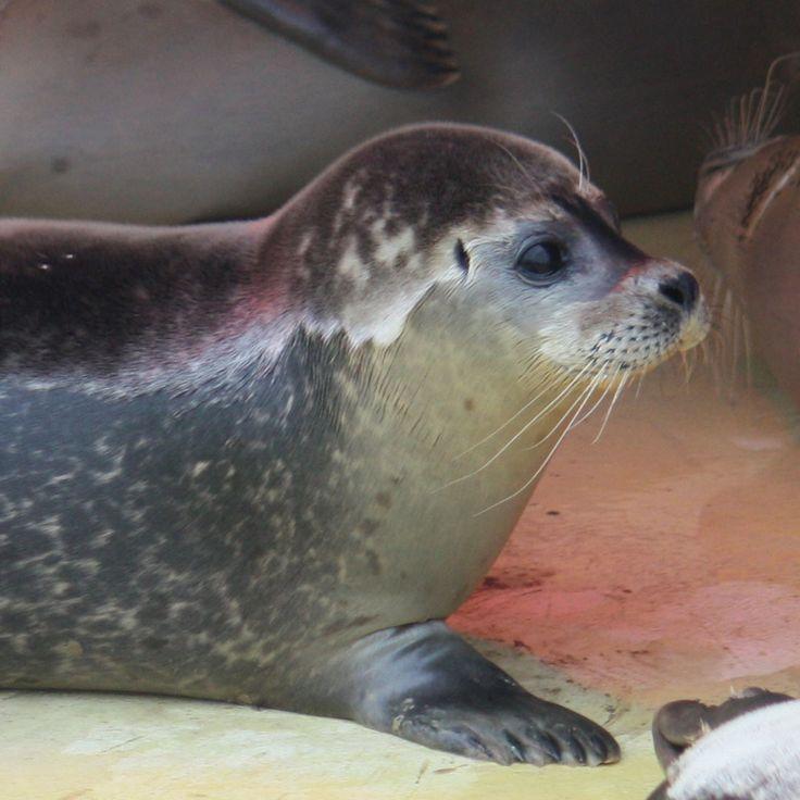 Zeehondencrèche - Seal Rescue Center in Pieterburen, The Netherlands