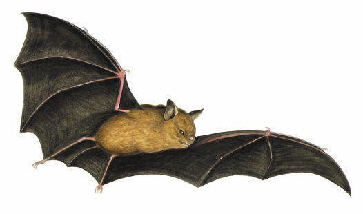 Dating h&b bats in Sydney
