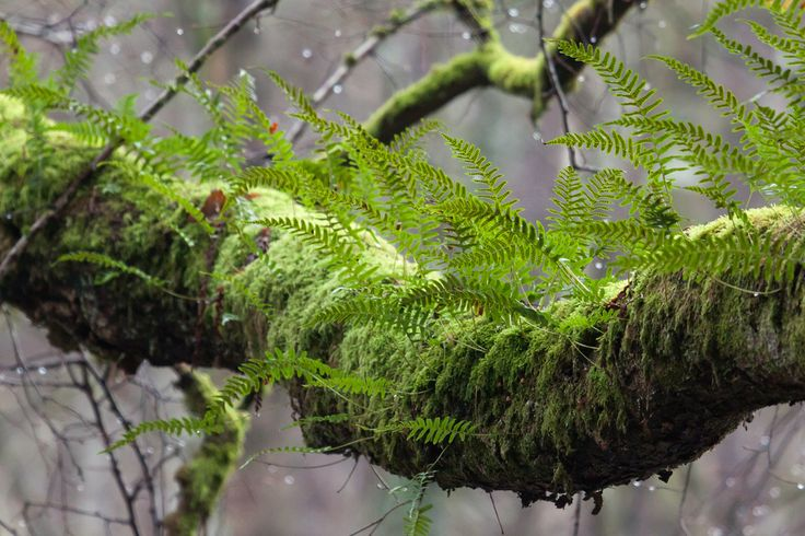 Best 25 Gecko Vivarium Ideas On Pinterest Lizard