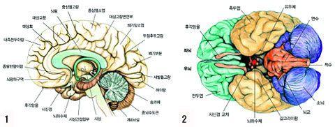 주간조선 - 1등 인터넷뉴스 조선닷컴