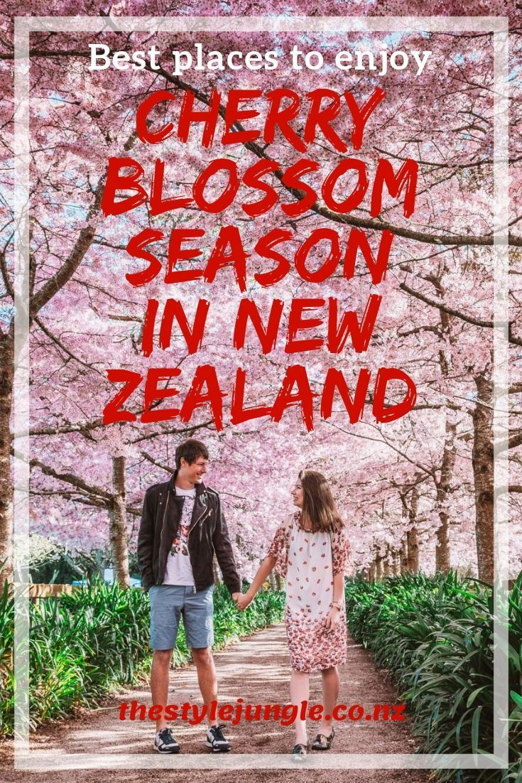 Cherry Blossom Trees In New Zealand Are Spectacular Hamilton Cambridge Napier And Other Places To Enjoy New Zealand Travel Guide Seasonal Travel Travel Blog