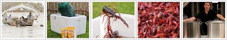 Live Crawfish for Sale!