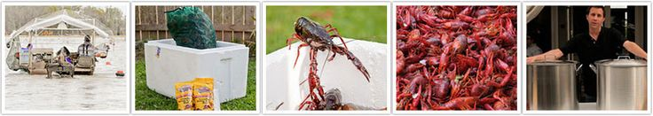 Live Crawfish for Sale!