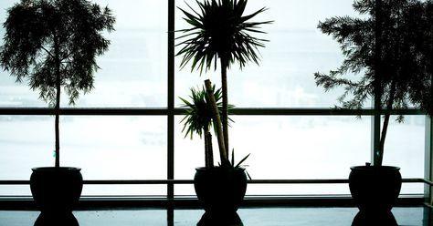 ¿Qué tipo de árboles pequeños son buenos para plantar en una maceta grande de flores?. Los árboles hacen un gran impacto, incluso cuando son pequeños. Dentro de casa, un árbol pequeño parece más grande y ofrece grandes dividendos decorativos. Afuera, los árboles en contenedores ofrecen tanto portabilidad como versatilidad. Planta un naranjo en un contenedor y podrá vivir en un jardín en Michigan durante la primavera y el verano. ...