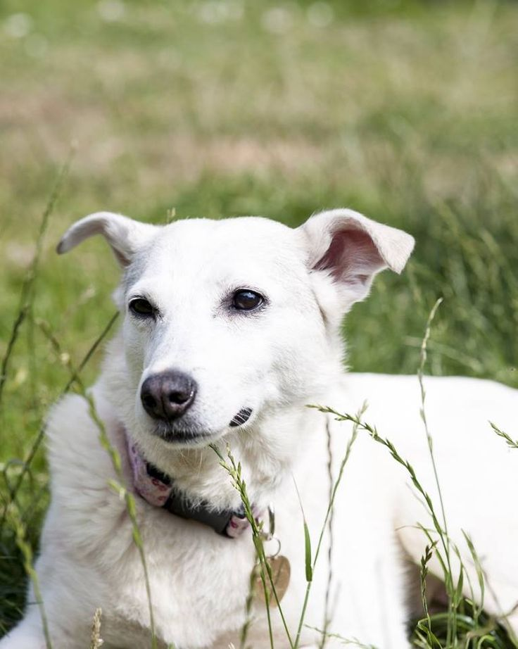 The Plight of Romanian Stray Dogs. Huffington Post