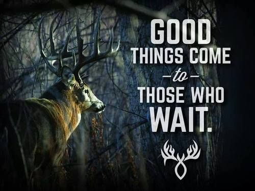Funny Hunting Quotes Delectable 12 Best Quotesimages On Pinterest  Hunting Stuff Deer Hunting
