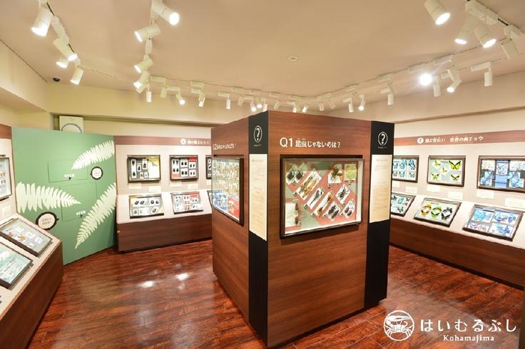今年の7月にホテル内にオープンした『名和昆虫博物館 はいむるぶし分室』。  八重山の昆虫はもちろん!世界中の珍しい昆虫たちが展示されています。(入館は無料)