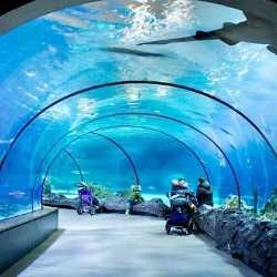 The Zoo is always a good idea! #repost @sabine.smit #📷 via @latermedia  #oceanium #shark #diergaardeblijdorp #rotterdam #loverotterdam  #blijdorp #rotterdamzoo #animals #animal #water #blue #wandering #rotterdamdaily #rotterdam010 #igersrotterdam #ig_holland #ig_rotterdam #igersrotterdam #zootopia  #rotterdamzooblijdorp #shark #fish #explore