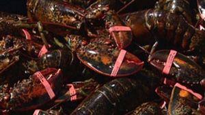 PEI to become Canada's Food Island! http://www.cbc.ca/news/canada/prince-edward-island/p-e-i-to-become-canada-s-food-island-1.2994344